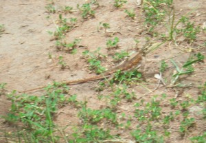 picture of a random lizzard that I accidently uploaded and couldn't get to delete :)