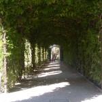 Wittenberg Part 6 454